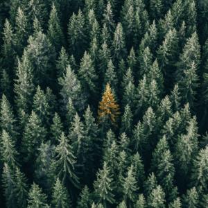 homme-qui-pleurait-des-arbres