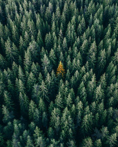 lhomme_qui_pleurait_des_arbres_christopher-rusev